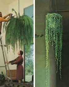 hanging plant hanging plants the secret garden