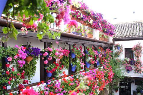 los patios cordoba discover quot los patios de cordoba quot festival of flowers and
