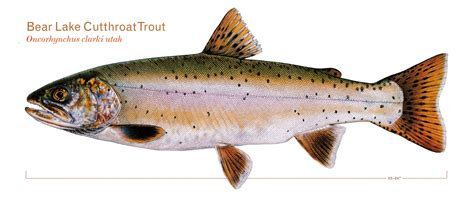 fishing trout fly fishing sport fishing americas
