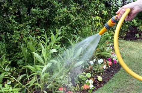 water for plants recycle grey water for garden house and gardening addicts