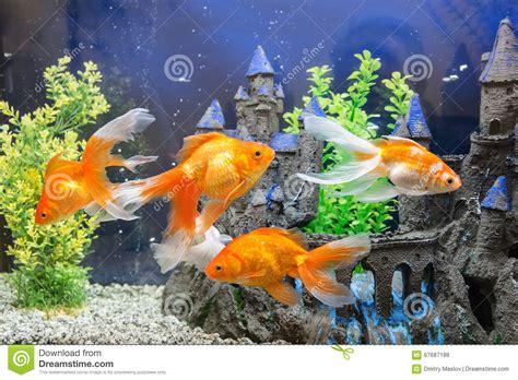 aquarium avec le poisson photo stock image 67687188
