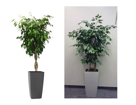 plants for the office artificial office plants archives park plantscapes