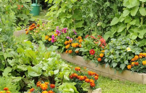 flowers to plant in vegetable garden 5 easy ways to create a stunning vegetable garden