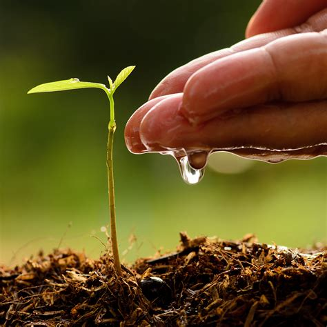 water for plants the ultimate sheet for watering house plants