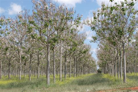 tree farming sustainable investments lasting value silvinvest