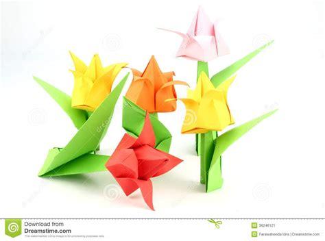 origami tulip flower origami tulip flower stock image image 36246121