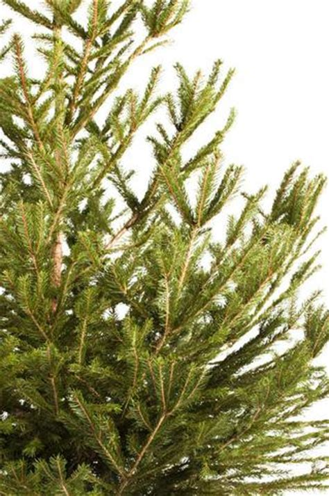 order real tree real tree delivery uk order