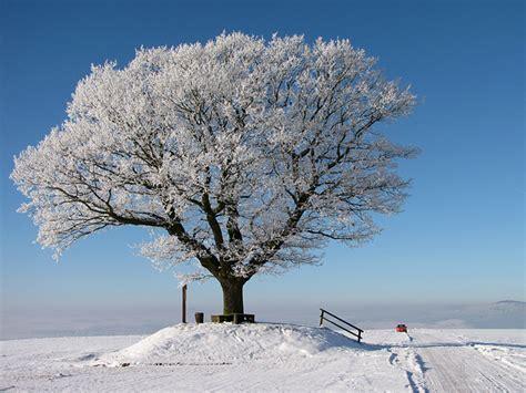 winter trees winter tree new calendar template site