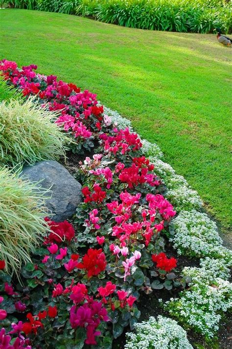 garden flower borders flower bed border ideas alyssum begonia and ornamental
