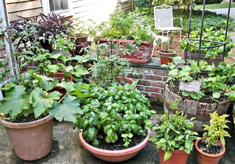 vegetable gardening in pots tips for growing vegetables in containers