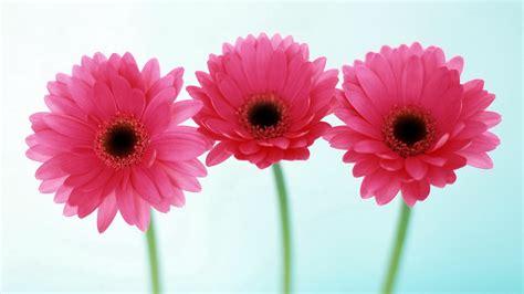 flower images flower images free clip free clip