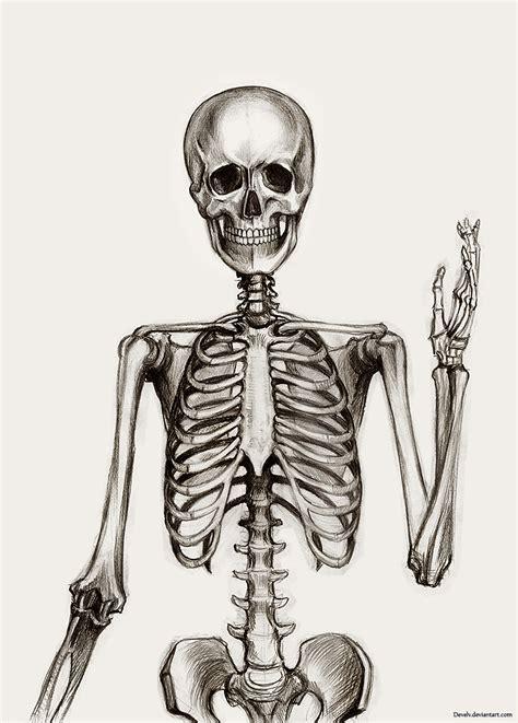 a skeleton anatomy skeleton by develv on deviantart
