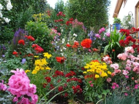 garden flower types types of flowers pictures different blue and
