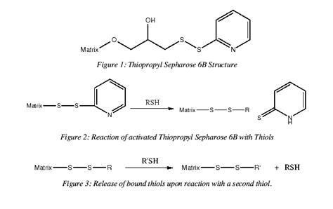 sepharose 4b sepharose meddic