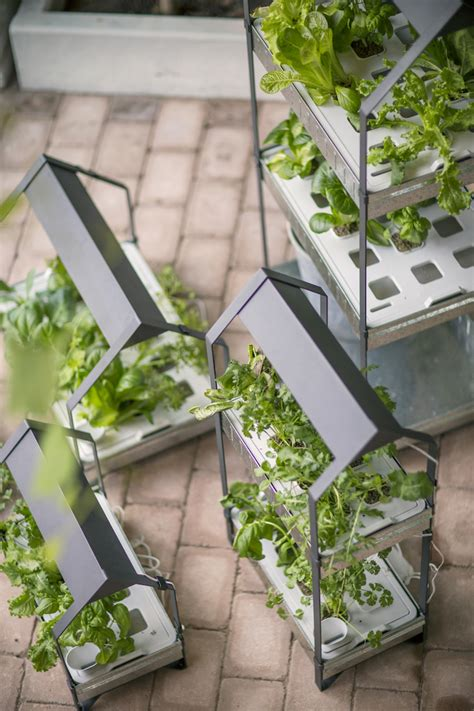 hydroponic vegetable garden kit new from ikea a hydroponic countertop garden kit gardenista
