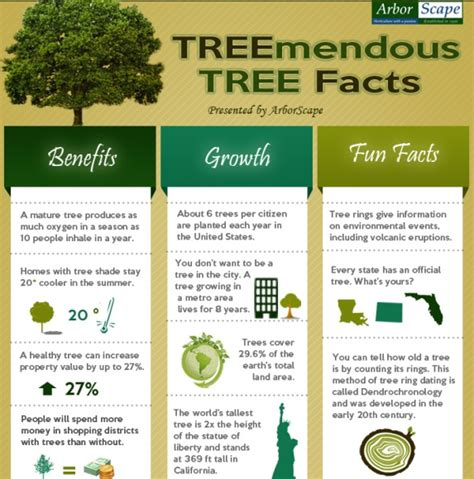 tree facts trivia infographic ideas 187 infographic facts best free