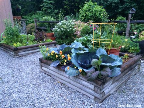 garden gravel ideas how to enhance your garden with gravel