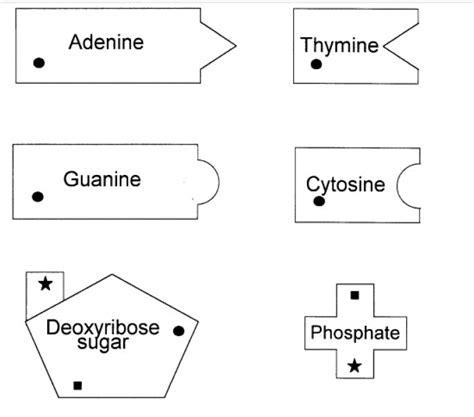 dna origami template pdf 19 best dna models images on