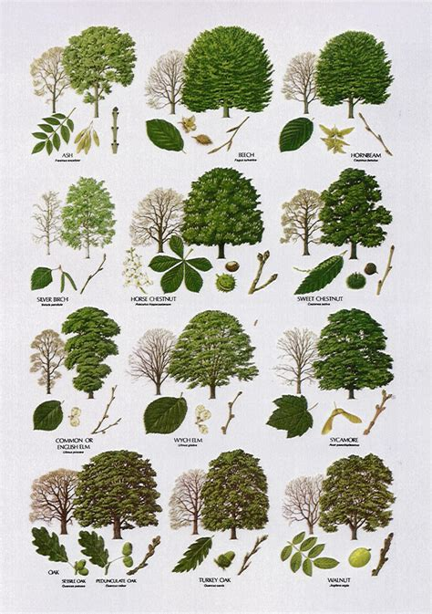 name of the tree 3 tree leaf identification in plants