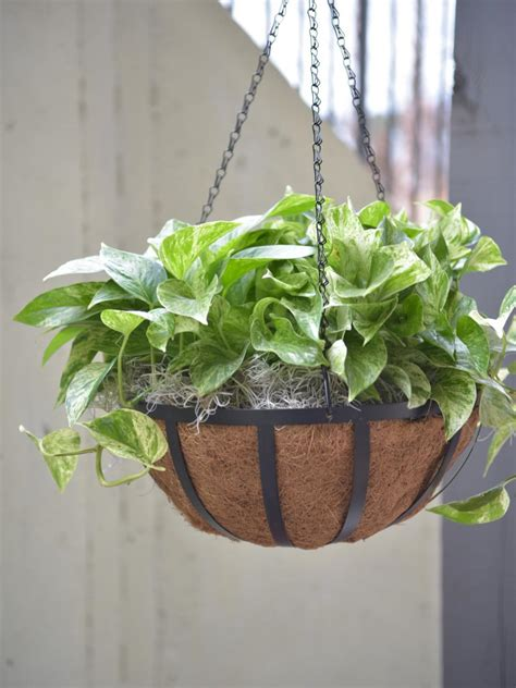 hanging plant best outdoor hanging plants for hgtv