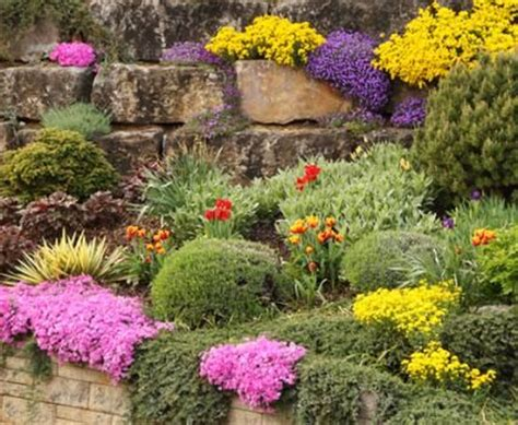 best plants for rock gardens best plants for rock gardens gardening