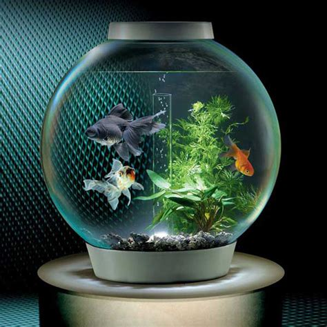 BiOrb Self Filtering Aquarium   The Green Head