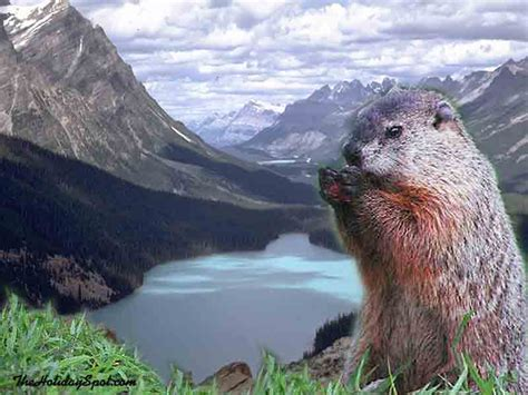 groundhog day hd groundhogday wallpapers and screensavers free