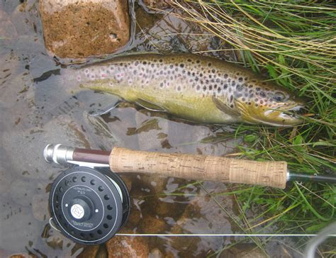 fishing trout trout fishing photos
