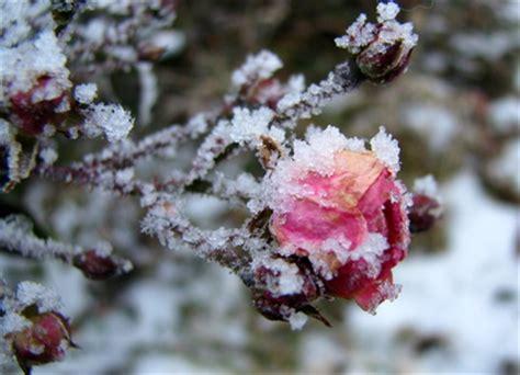 Der Garten Im Winter by Garten Allerlei Frauerlei Gesundheit Garten Und Genuss