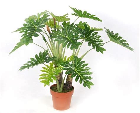 indoor plants no light plants but no sunlight these plants can be your