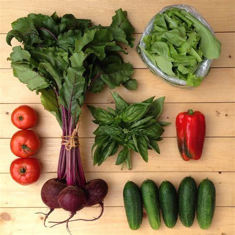 growing a vegetable garden for beginners growing a beginner vegetable garden backyard riches