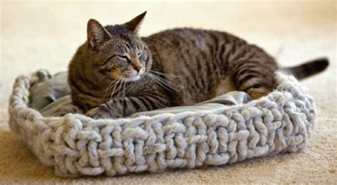 knit cat bed pattern knitting patterns for pets you to knit interweave