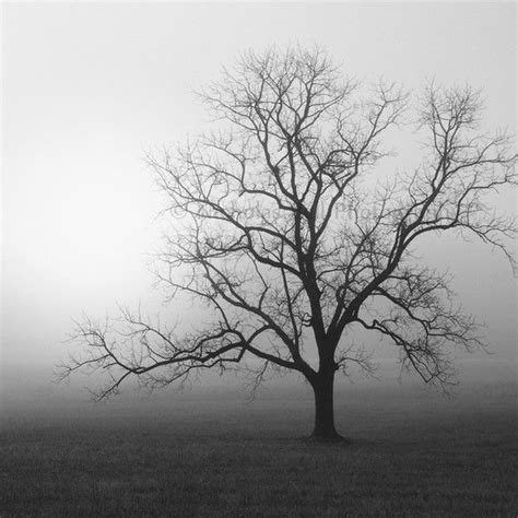 tree in white black and white photography trees tree tree photography