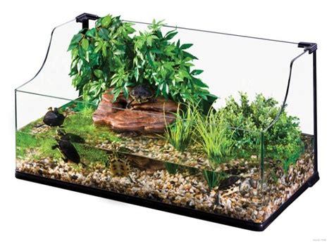 plantes pour terrarium tortue