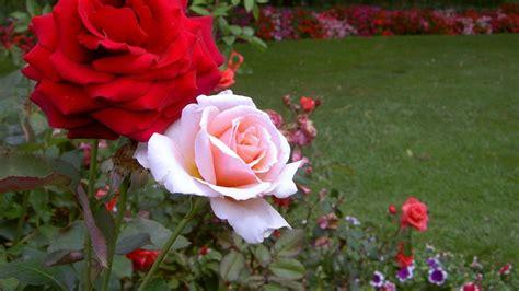 green garden flowers flower garden wallpaper