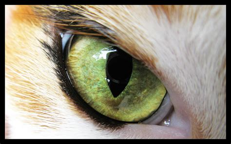 cat eye cat eye by arasae on deviantart