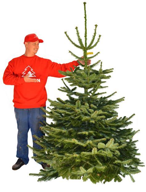 weihnachtsbaum kaufen hamburg tannenbaum hamburg lieferservice weihnachtsbaumschlagen