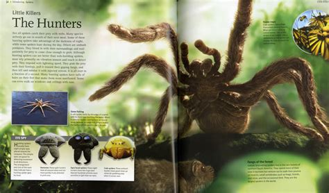 spider picture books insects spiders book by noel tait official publisher