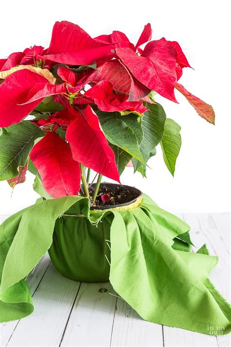 creative way to wrap a plant or flower pot in