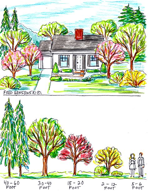 where to place a tree some ideas about planting trees by your house for curb