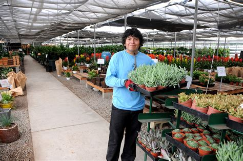 wholesale san diego wholesale succulent nursery orange county los angeles