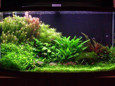 types de bac aquarium eau douce aquarium hollandais vie l aquariophilie d eau douce