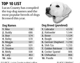 top 10 top 10 lists of 2017 187 puppy boy puppy names