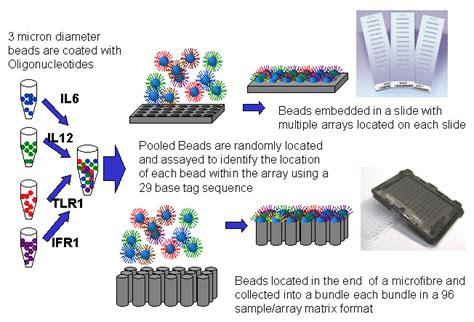bead chip newsletter transcriptomics functional genomics