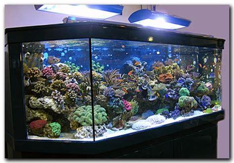 photo aquarium eau douce pas cher