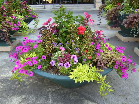 garden flower pots garden designers roundtable containers garden bristol