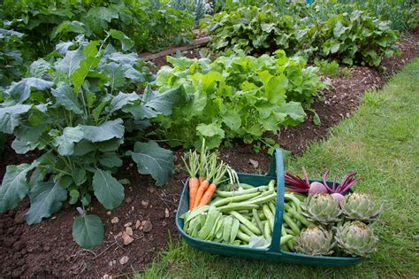 garden vegetable quotes about vegetable gardens quotesgram