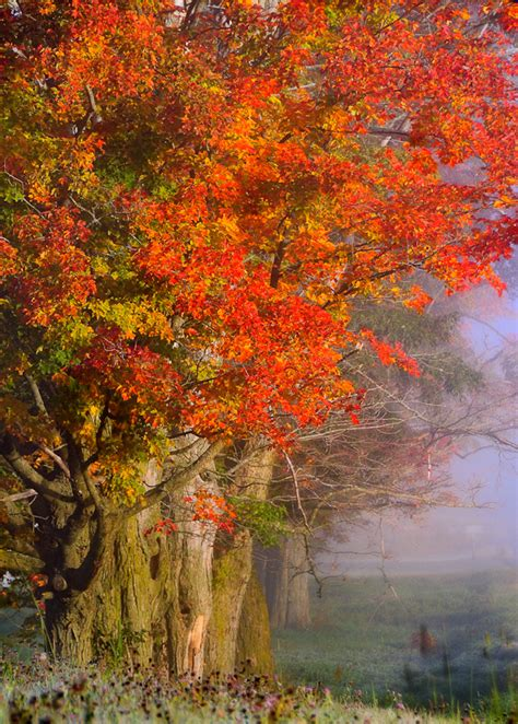 for fall fall images of vermont