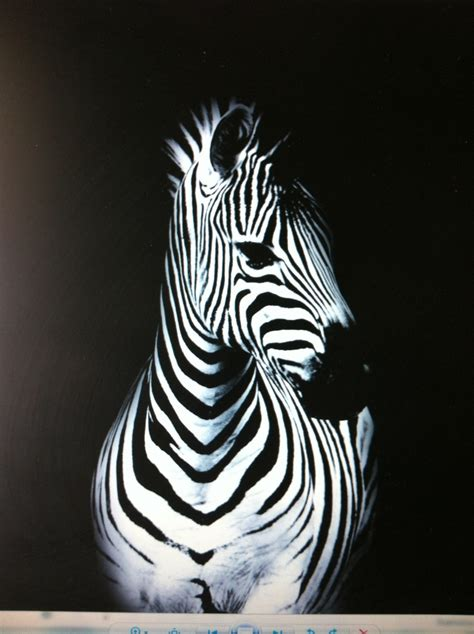 acrylic painting zebra 17 best images about paint giraffes zebras hippos