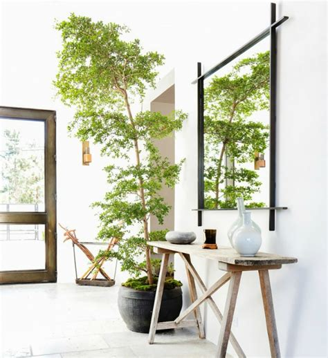 mejores plantas de interior decoraci 243 n f 225 cil 10 mejores plantas de interior